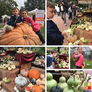 blog201611-Lyon_pumpkinpatch