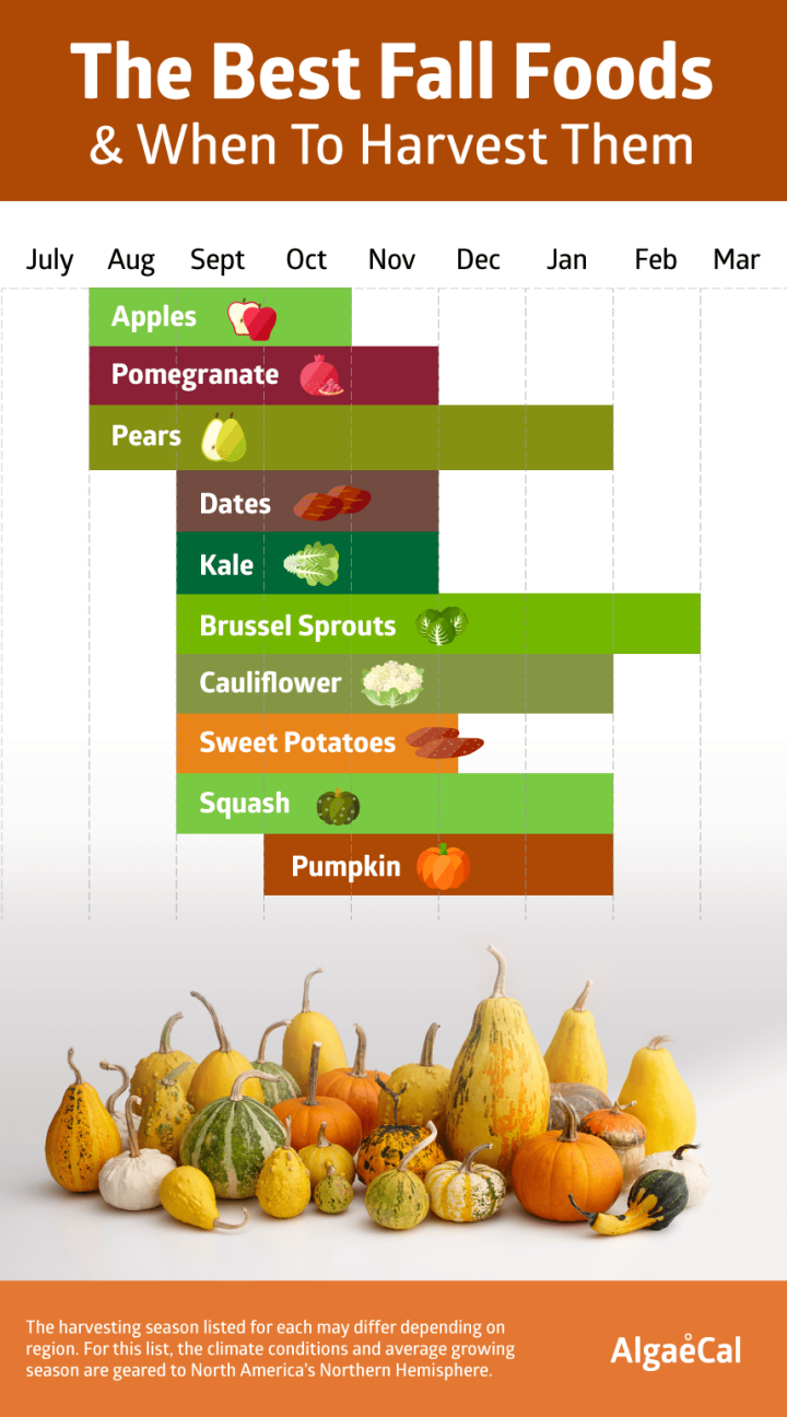 fall-foods-1-1.png