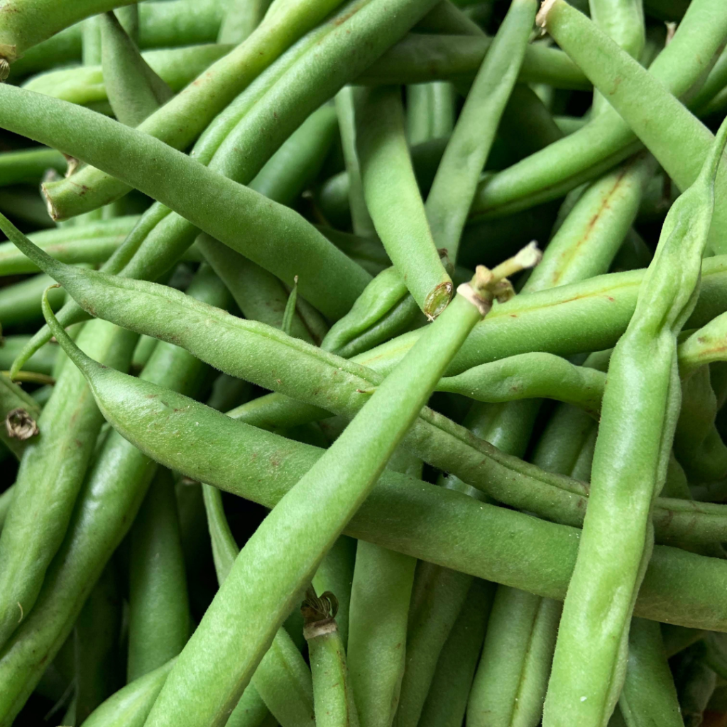 Green beans. Thanksgiving food. Teuko lunchbox community. Kids Lunch ideas.